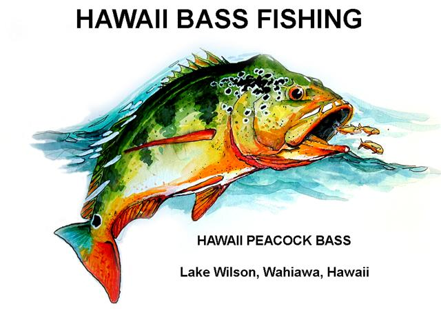 welcome to hawaii bass fishing: the best fishing in hawaii.., Fishing Reels